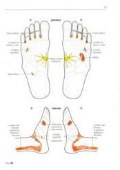 Massaggio linfatico: aree trattamento con riflessologia plantare e massofisioterapia.